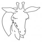 Studium NVC - żyrafa