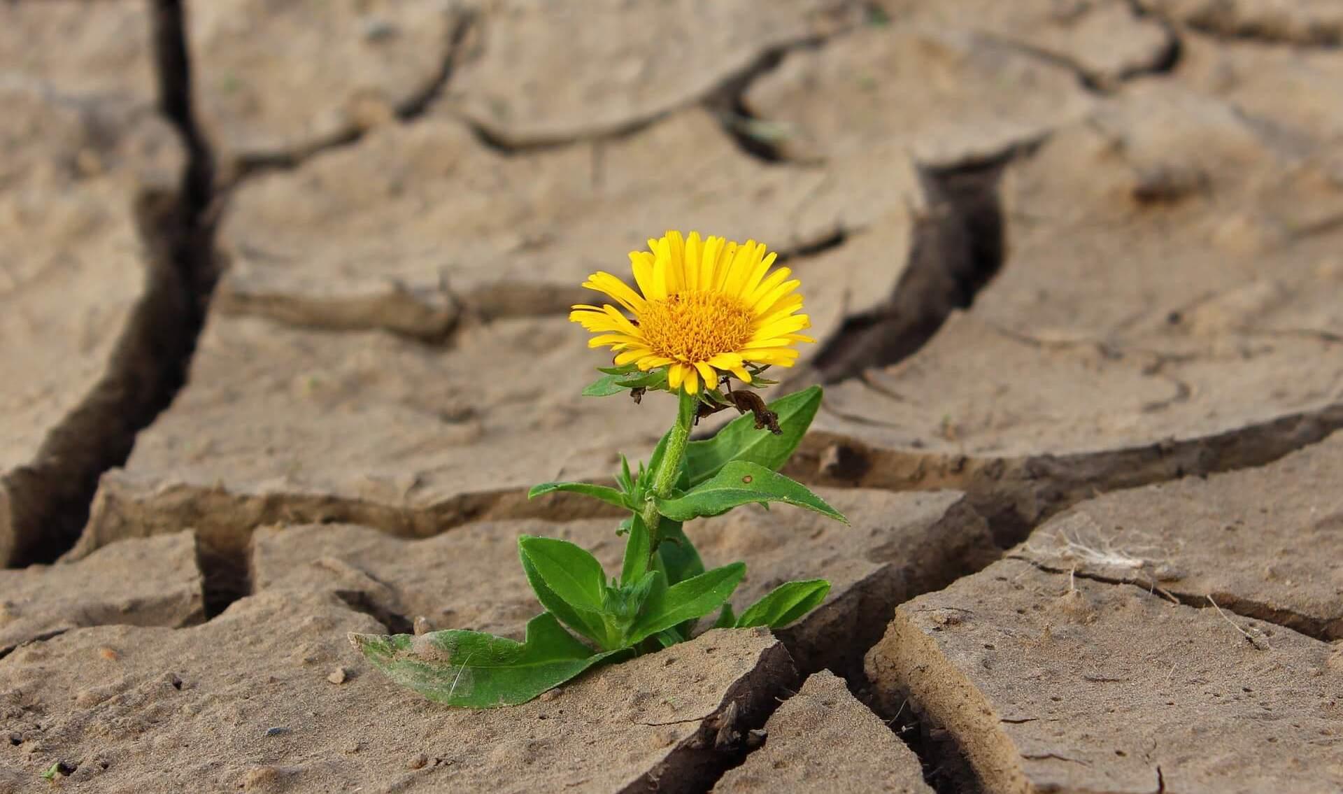 Bezsilny… czy pełen mocy – transformacja bezsilności